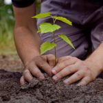 Tree Planting World Record