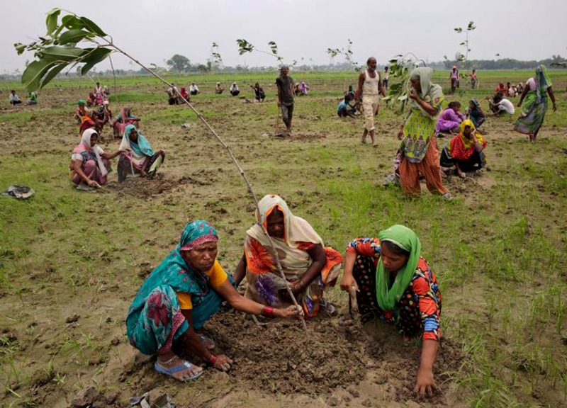 Tree Planting World Record