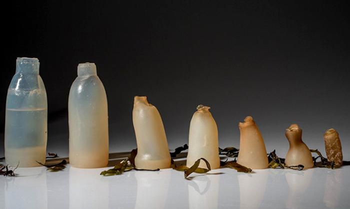 Algea - Agar - Biologic bottle