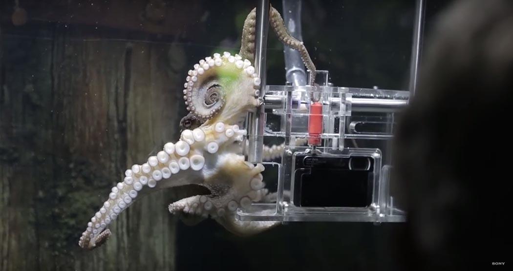 Reklam - Kampanya - Hayvanlar - Su Gecirmez Fotograf Makinasi - Ahtapot - Sony - Waterproof - Camera