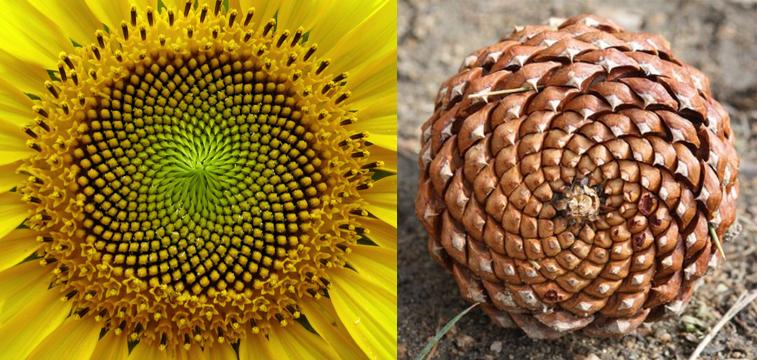 Sanat - Heykel - Kinetik Heykel - Blooms 2 - John Edmark - Phi number - Golden Ratio - Kinetic Sculpture