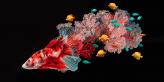 Sanat - Resim - illüstrasyon - Lisa Ericson - Hyperrealistic - Hiper Gercekçi