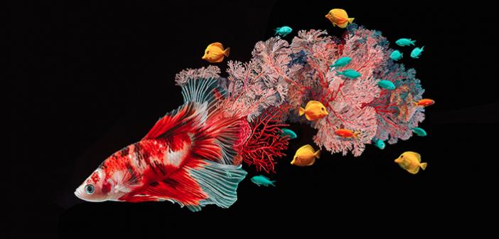 Hiper Gerçekçi, Balık & Mercan Karışımı Hayvanlar – LISA ERICSON