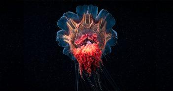 Crea.Tips - Sanat - Fotoğraf - Doğa - Hayvan - Derin Su Altı - Deniz - Canlı - Alexander Semenov