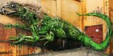 Crea.Tips - Sanat - Sokak Sanati - Graffiti - 3 Boyutlu - Kolaj - Bordello II - Big Trash Animals - Hayvanlar