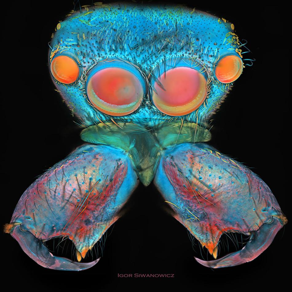 http://crea.tips/wp-coCrea.Tips - Doğa - Fotoğraf - Böcek - Photography - Igor Siwanowicz - Microlaser Insect Detail