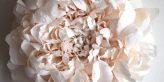 Crea.Tips - Art- Paper Art - Book - Tiffanie Turner - The Fine Art Of Paper Flowers - Gerçekçi - Kağıt Çiçekler